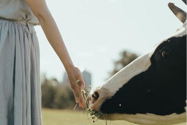 Ceolito panaudojimas žemės ūkyje