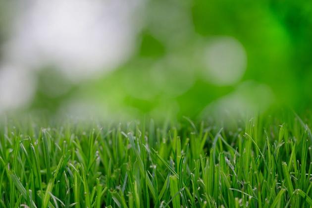 Ceolitas - vejos įrengimo drenažinė sistema